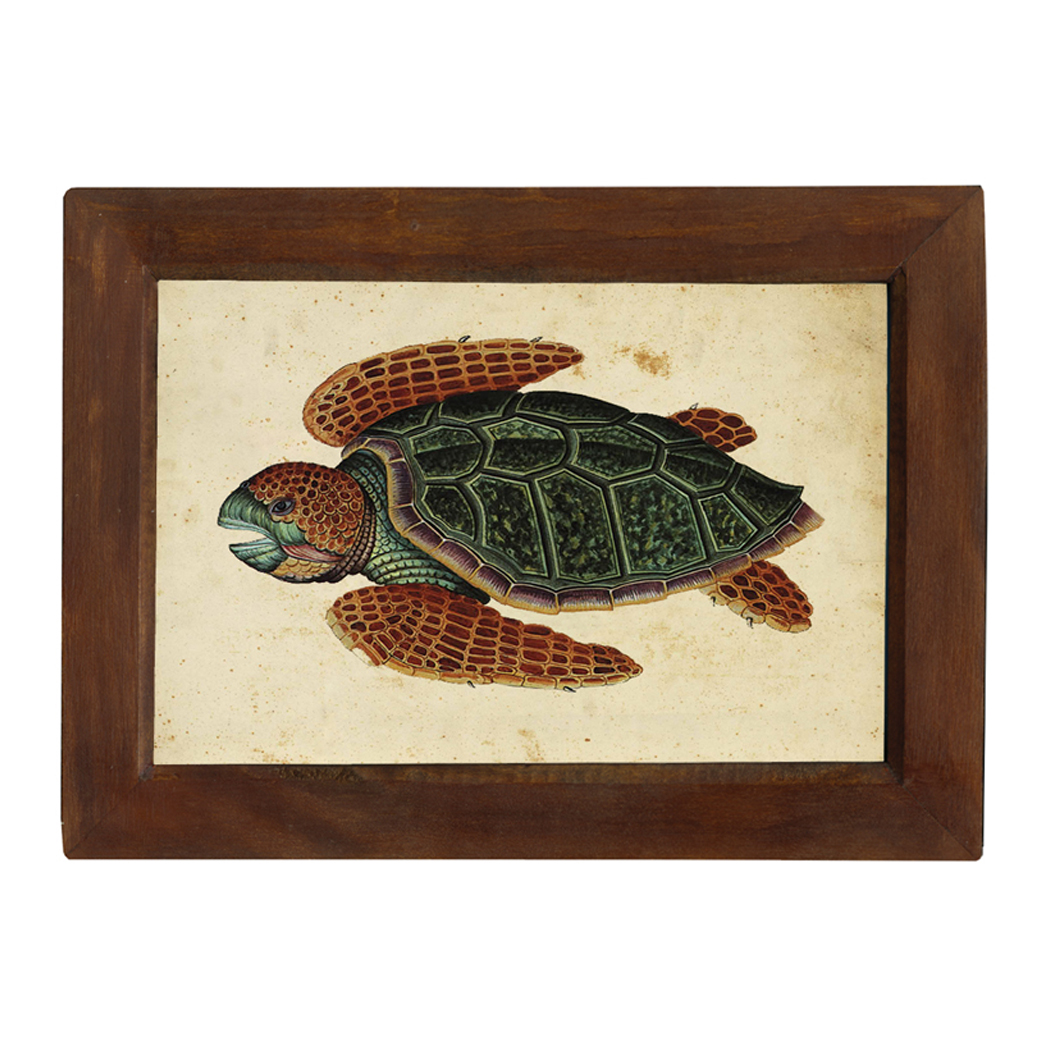 Sea Turtle 6 1 2 X 10 Print Behind Glass Red Brown Distressed Solid Wood Frame Framed Size Is 8 1 2 X 12 Schooner Bay Company
